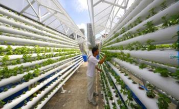 Κάθετη γεωργία : Η τελευταία τάση στην παραγωγή τροφίμων