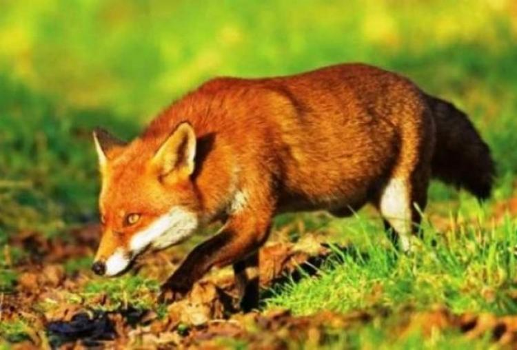 Παράταση του χρόνου εφαρμογής του προγράμματος ενεργητικής επιτήρησης της λύσσας