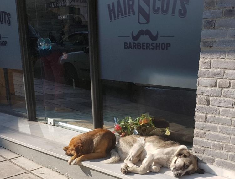 Σκυλίσια ζωή!