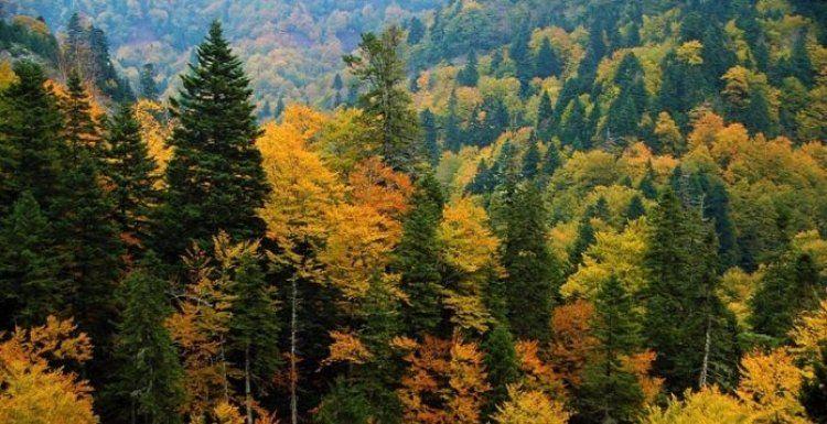 Περισσότερα από 300 εκ. Ε σε δικαιούχους για την εφαρμογή του Π.Α.Α. σε δασικού χαρακτήρα επεμβάσεις