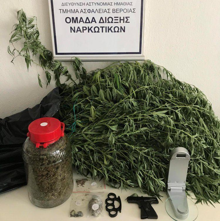 Συνελήφθη 37χρονος σε περιοχή της Ημαθίας για καλλιέργεια και διακίνηση κάνναβης