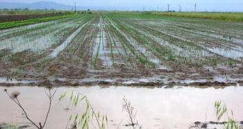 Ανταποκριτές ΕΛΓΑ Αλεξάνδρειας: Οριστικές αιτήσεις για το πρόγραμμα Κ.Ο.Ε. «Πλημμύρες 2014-2015»