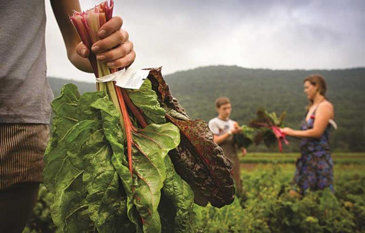 Δ/νση αγροτικής οικονομίας και αλιείας της ΠΚΜ: Ένταξη επιπλέον δικαιούχων στο υπομέτρο «εγκατάσταση νέων γεωργών»