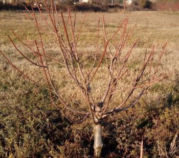 Συνεργείο της ΕΡΤ3 επισκέφθηκε το Τμήμα Φυλλοβόλων Οπωροφόρων Δένδρων Νάουσας
