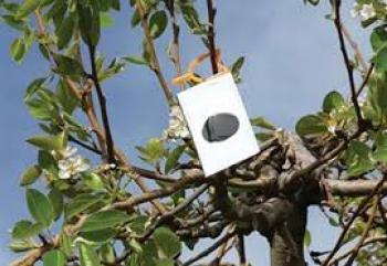 Το Μάιο η 2η προκήρυξη του «ΚΟΜΦΟΥΖΙΟ», εντάσσονται και η μηλιά, η αχλαδιά και η κυδωνιά