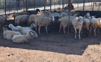 Δράση 10.1.09 «Διατήρηση απειλούμενων αυτόχθονων φυλών αγροτικών ζώων», ύψους 38 εκατ. ευρώ