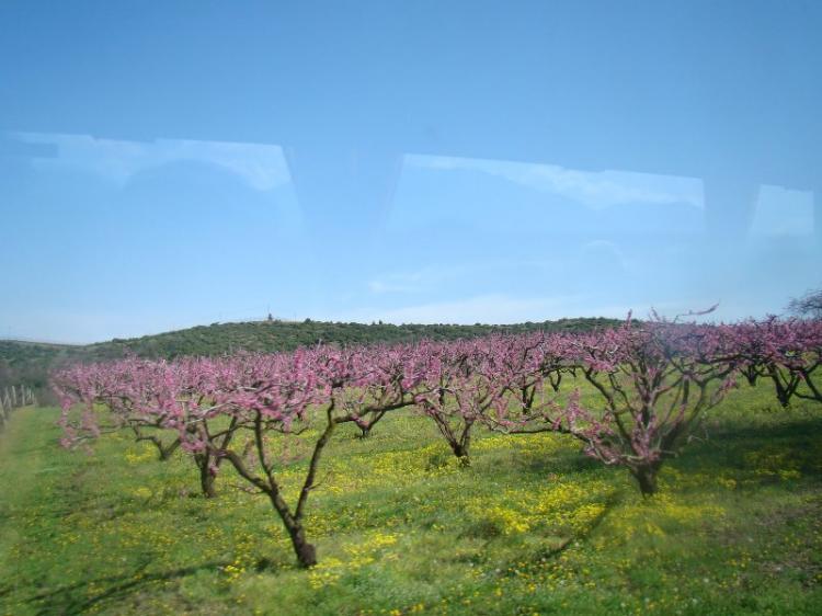 Έγκριση χρηματοδότησης έργων αγροτικής οδοποιίας στο Δήμο Νάουσας, ύψους 922.600 ευρώ