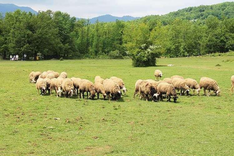 Ολιγοήμερη παράταση υποβολής των αιτήσεων στην πρόσκληση της βιολογικής κτηνοτροφίας