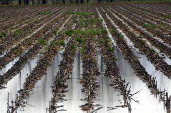 Νέα πορίσματα εκτίμησης ζημιών από τον ΕΛΓΑ σε καλλιέργειες παραγωγών της Αλεξάνδρειας