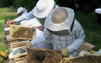 Ενισχύσεις ύψους 767.486 Ε για την εφαρμογή της δράσης 1.1 «Λειτουργία Κέντρων Μελισσοκομίας» έτους 2017