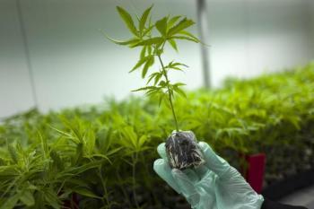 Εκδόθηκε η ΚΥΑ για την καλλιέργεια φαρμακευτικής κάνναβης