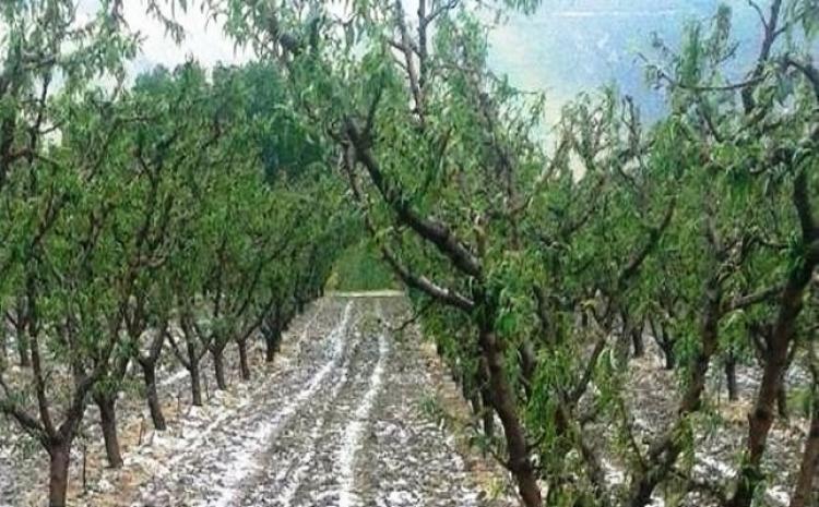 Αναγγελία ζημιάς από χαλαζόπτωση σε καλλιέργειες του Δήμου Βέροιας