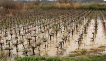 Αναγγελία ζημιάς από βροχόπτωση σε δενδρώδεις καλλιέργειες του Δήμου Βέροιας