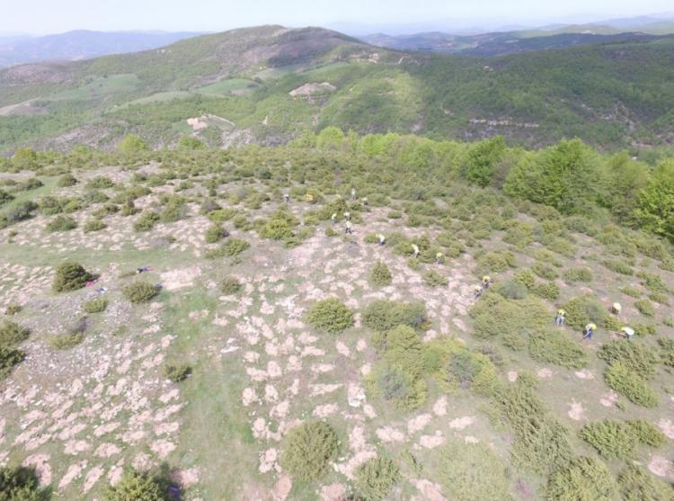 Αναδάσωση από τον ΤΑΡ στη Βόρεια Ελλάδα, με 400.000 δένδρα και θάμνους