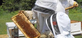 Δωρεάν εκπαιδεύσεις μελισσοκομίας στις εγκαταστάσεις του Κέντρου «Δήμητρα» Μακροχωρίου (πρώην ΚΕΓΕ)