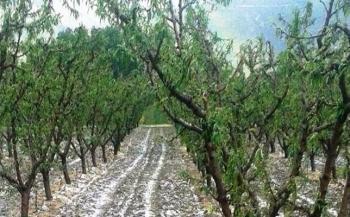 Αναγγελία ζημιάς από χαλαζόπτωση σε καλλιέργειες στη Δημοτική Κοινότητα Βέροιας