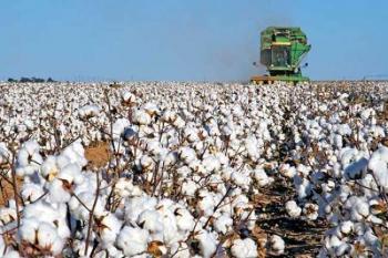 Δελτίο γεωργικών προειδοποιήσεων ολοκληρωμένης φυτοπροστασίας στη βαμβακοκαλλιέργεια της Ημαθίας