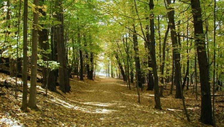 Γ. Καρασμάνης : «Τα δάση μας αφανίζονται και 254 εκ. ευρώ για την προστασία τους «λιμνάζουν» αναξιοποίητα στις Βρυξέλλες»!