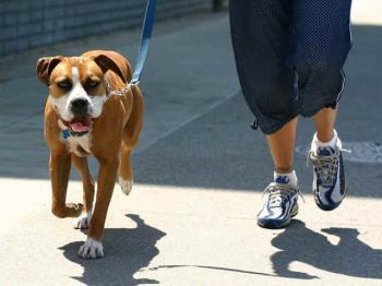 Δήμος Βέροιας : Τι πρέπει να κάνουν οι ιδιοκτήτες ζώων συντροφιάς