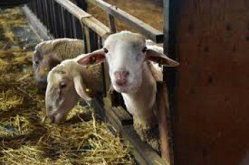 ΚΥΑ για την άδεια διατήρησης κτηνοτροφικών εγκαταστάσεων