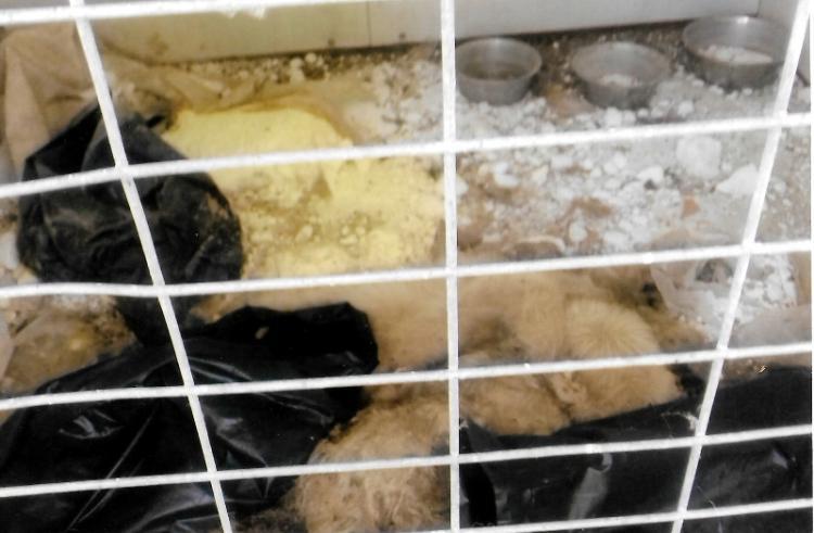 Φιλοζωικός Όμιλος Ημαθίας : «Τηρεί το νόμο ο Δήμος Βέροιας για τα αδέσποτα ζώα;»