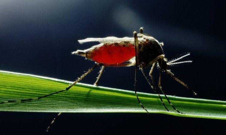 Ανακοίνωση διεύθυνσης κτηνιατρικής της ΠΚΜ για τον ιό του δυτικού Νείλου