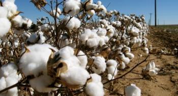 3ο Δελτίο Γεωργικών προειδοποιήσεων ολοκληρωμένης φυτοπροστασίας στη βαμβακοκαλλιέργεια της Π.Ε. Ημαθίας