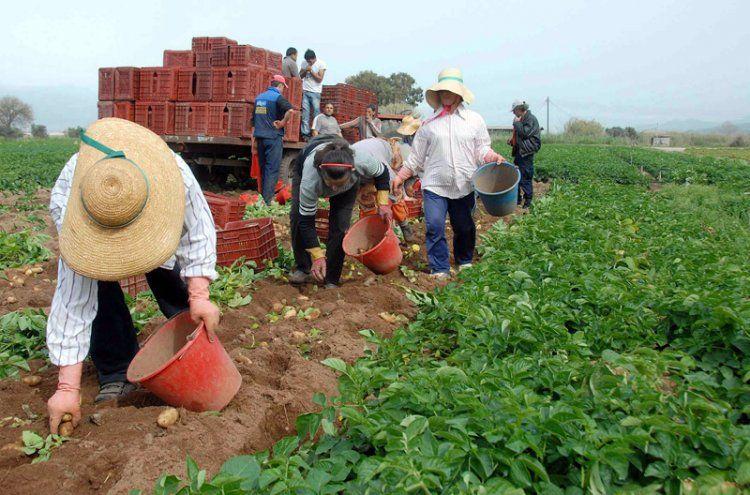 Χωρίς βιβλίο προσωπικού οι αγρότες που απασχολούν εργάτες με εργόσημο