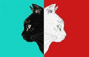 'Άσπρη γάτα, μαύρη γάτα, δεν έχει σημασία, αρκεί να πιάνει τα ποντίκια